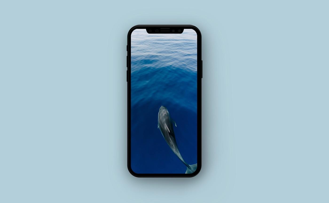Обои для iPhone - дельфин