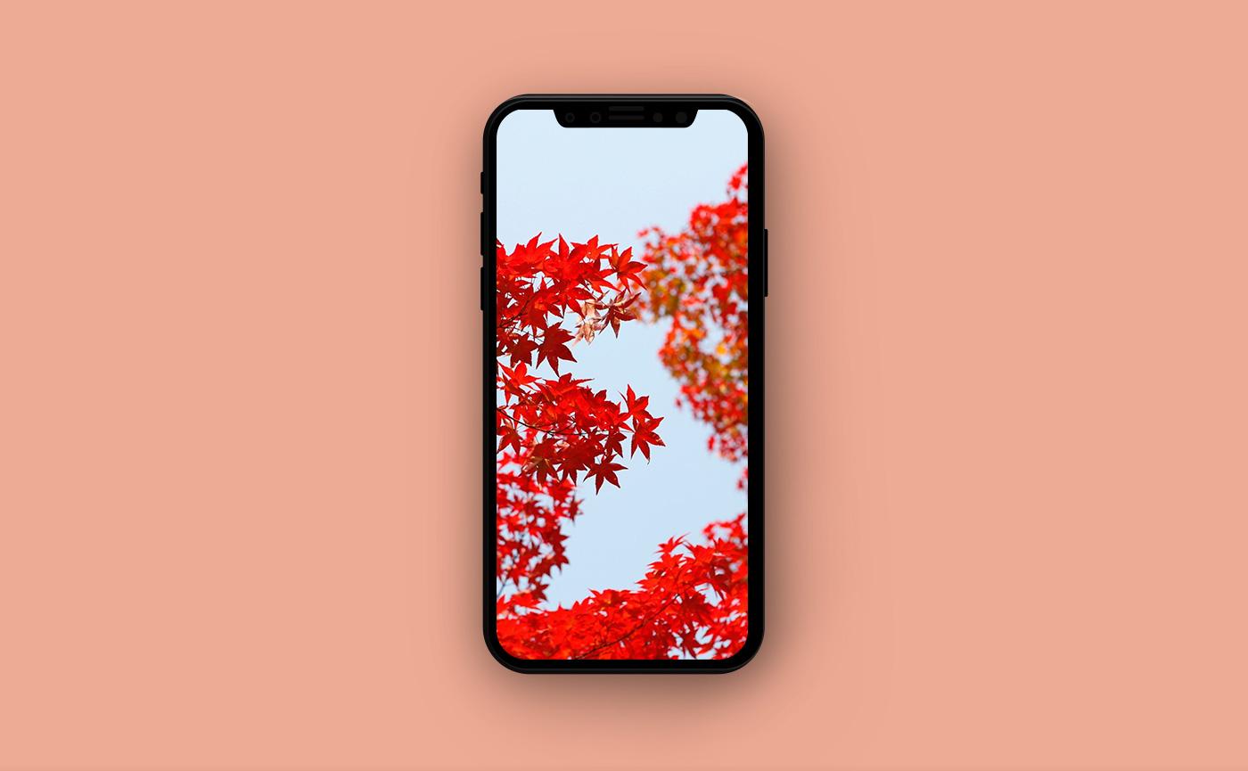 Осенние обои для iPhone - оранжевая листва