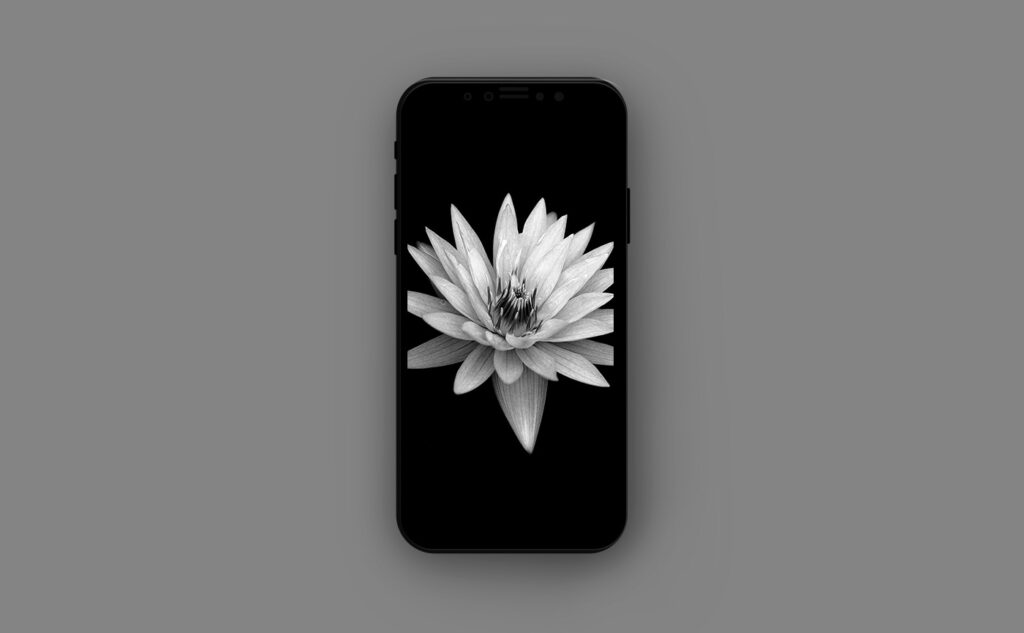 Цветочные обои для iPhone - макросъёмка цветка