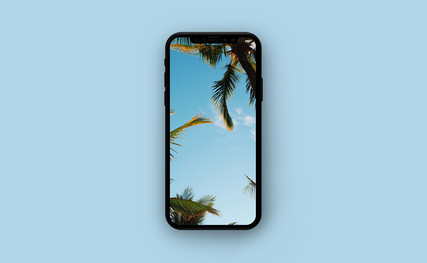 Туристические обои для iPhone - пальмы