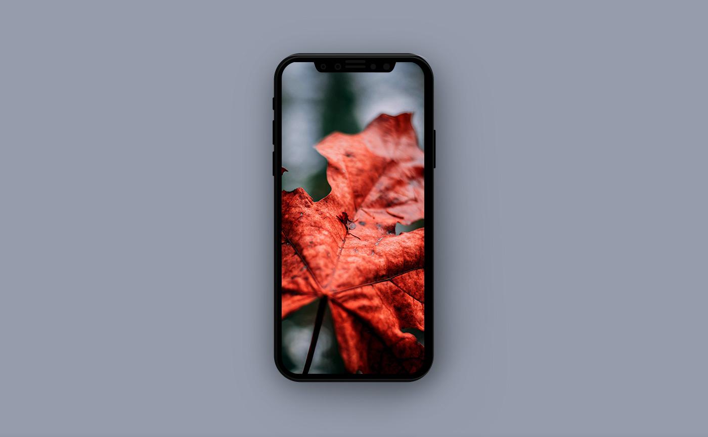 Осенние обои для iPhone - осенний лист