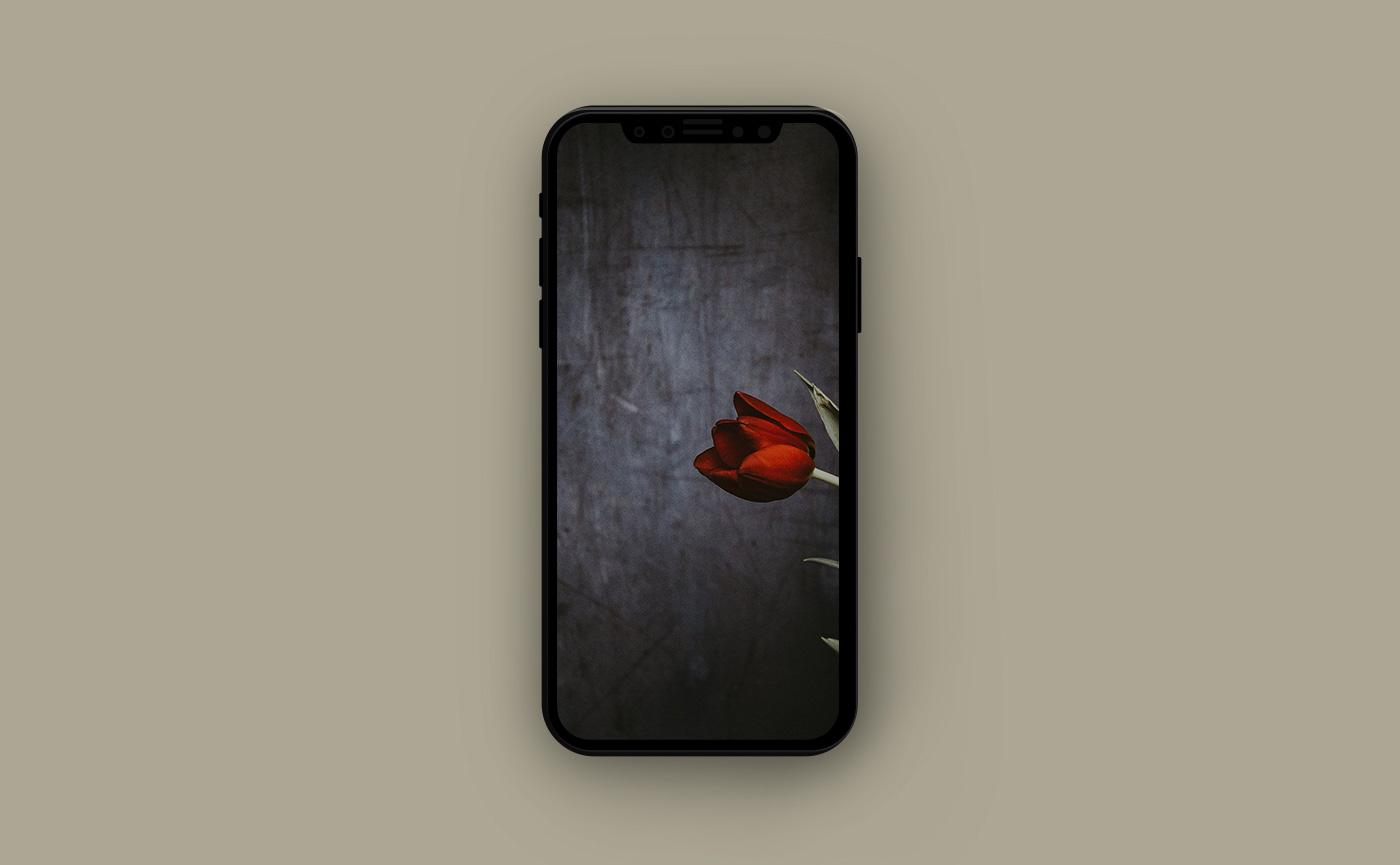 Цветочные обои для iPhone - тюльпан