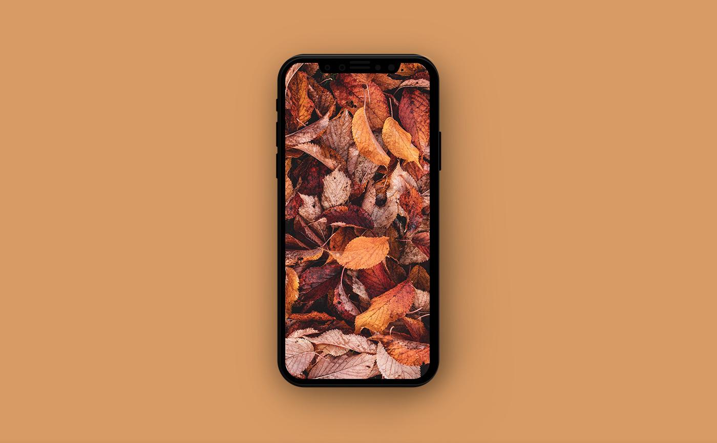 Осенние обои для iPhone - жёлтые листья
