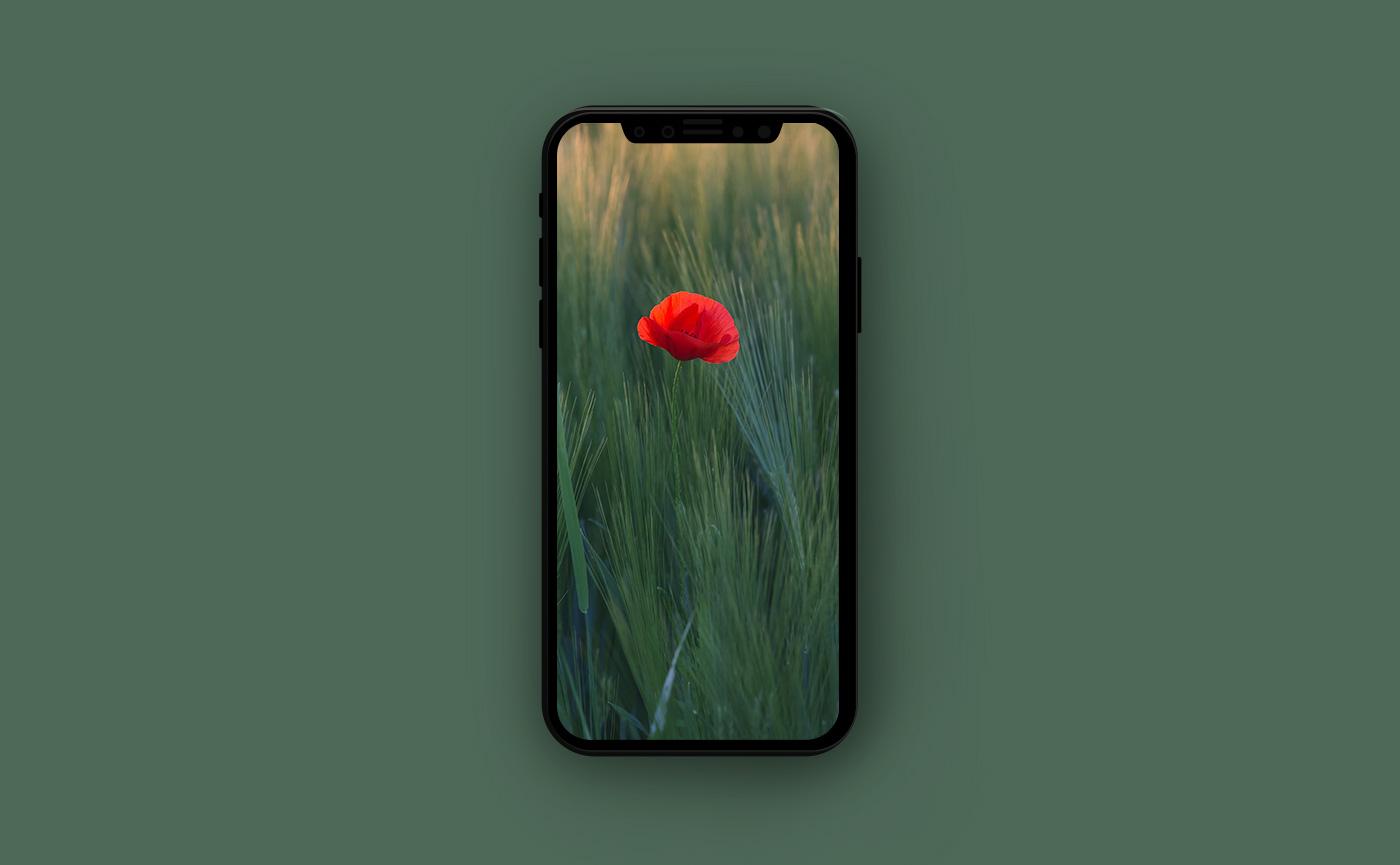 Цветочные обои для iPhone - мак в поле