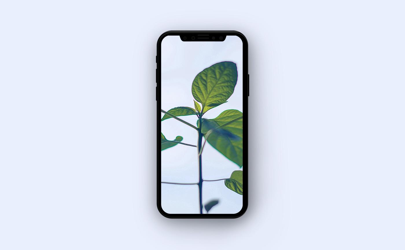 Цветочные обои для iPhone - зелёные листья